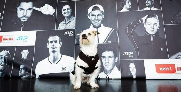 Photo : Barnie le chien, Feelgood Manager chez bett1, devant une affiche du tournoi de tennis bett1HULKS.